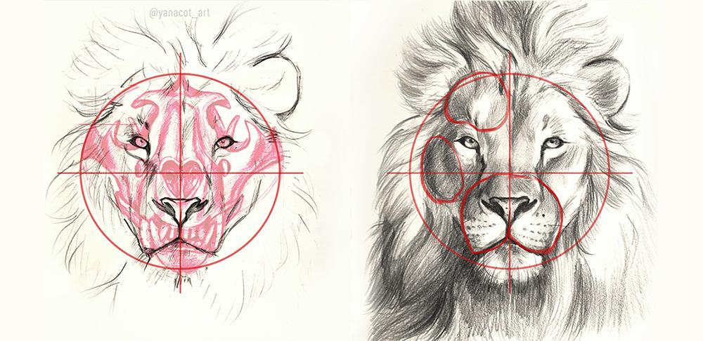 Анатомия головы льва. Часть 2: Анфас