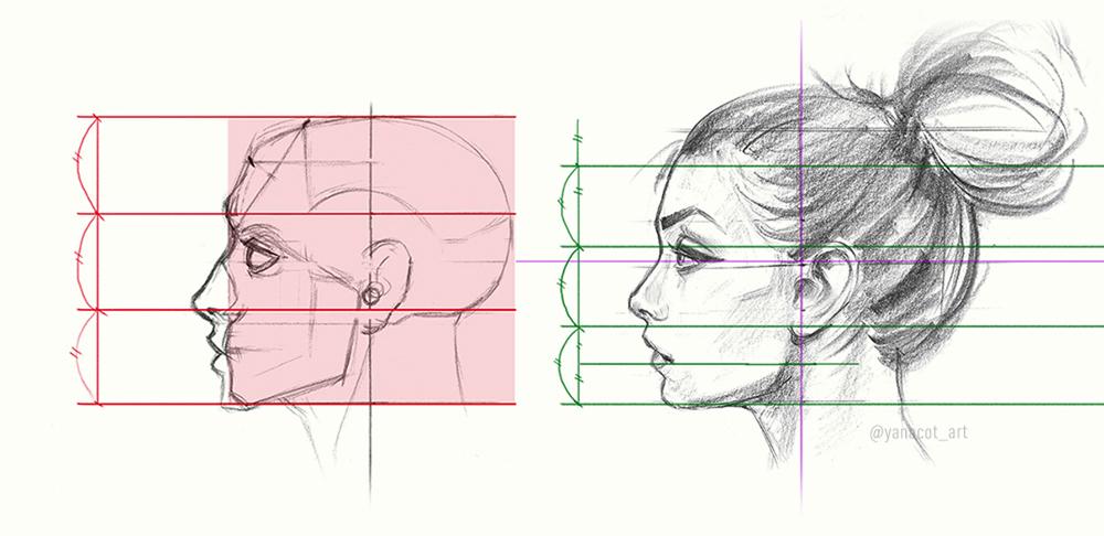 Пропорции и строение головы человека
